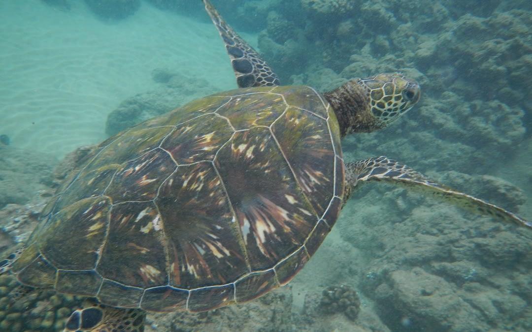 Unforgettable Scenery in Kauai Hawaii