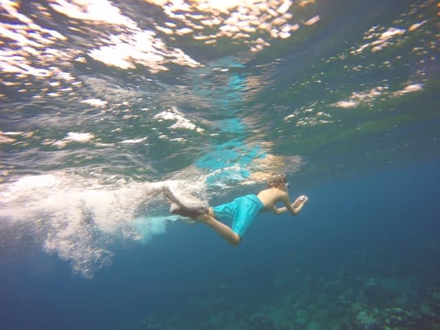 snorkeler in cayman islands